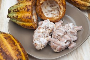 Cacao mature