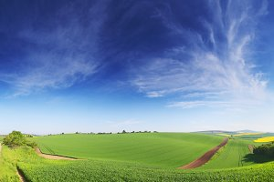 Green field panorama