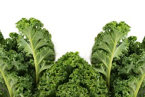 Green leafy kale vegetable