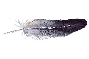 Watercolor black jay feather vector