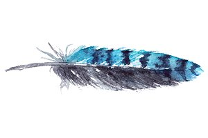 Watercolor blue jay feather vector