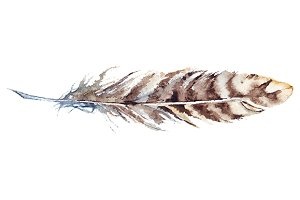 Watercolor stripe brown feather