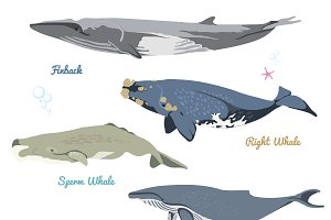 Vector Whales set