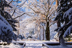 A Park in Winter #09