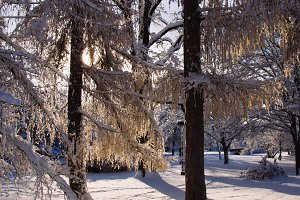 A Park in Winter #05