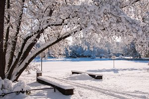 A Park in Winter #04