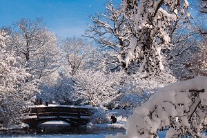 A Park in Winter #03