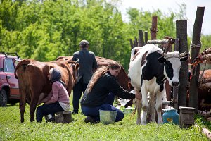 LUGANSK, UKRAINE - JUNE 19, 2016: Two women milk the cows in village