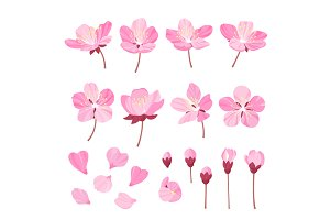 Set of beautiful cherry tree flowers isolated on wite background. Collection of pink sakura or apple blossom, japanese cherry tree. Floral spring design elements.Cartoon style vector illustration