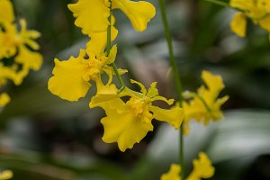 Beautiful orchid against natural green background in greenhouse