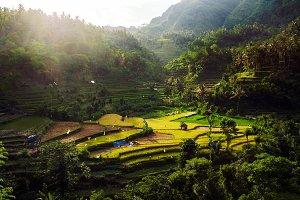 Lush Green Rice Terraces