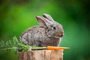 Rabbit. Beautiful animal of nature