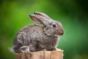 Rabbit. Beautiful animal of wild nature