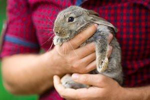 Rabbit. Animals and people