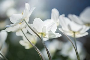 Beautiful Spring White Flowers
