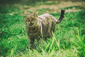 Funny cat on grass
