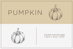 Pumpkin -Hand Drawn Vector Vegetable