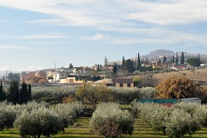 panoramic with olive tree