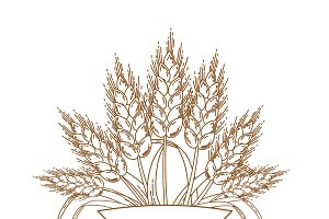 Vector illustration of gold ripe wheat ears. Icon, Logo or design element