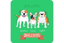 Set 3 bulldogs flat design