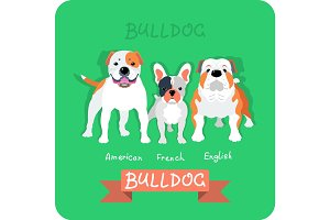 Set 3 bulldogs flat design