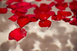 petals of red roses in a white bathroom with black tiles