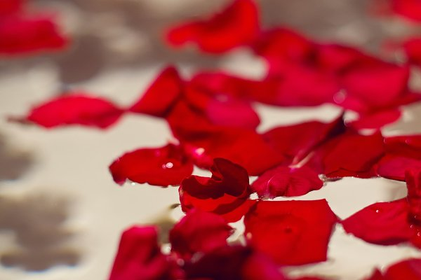 petals of red roses in a white bath…