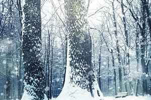 Winter nature snowy landscape outdoor background.