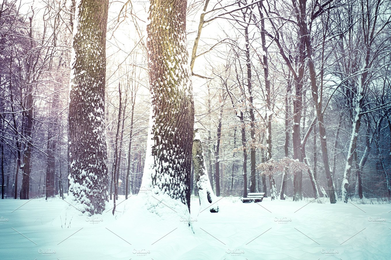 Winter Nature Snowy Landscape Outdoor Background Nature