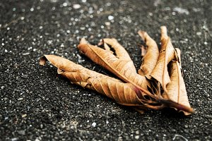 Dead and Dry Leaves