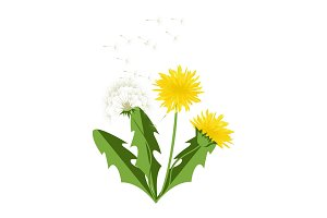 Vector illustration dandelions with leaves.
