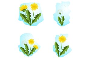 Vector illustration dandelions set with leaves.