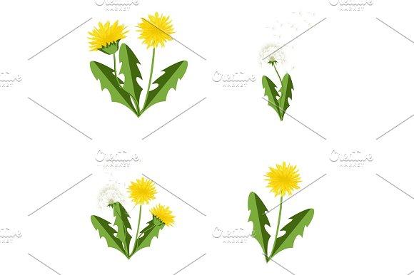Vector Illustration Dandelions Set With Leaves