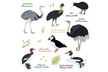 set of different birds, cassowary southern, ostrich, atlantic puffin, kiwi, little and great crested grebe, greater rhea,