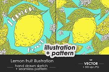 Lemon fruit illustration + pattern