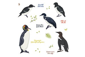 set of different birds, king penguin, common loon and murre, razorbill, little auk