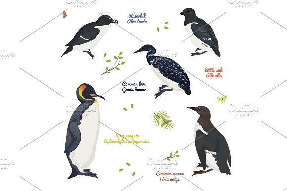 Set Of Different Birds King Penguin Common Loon And Murre Razorbill Little Auk