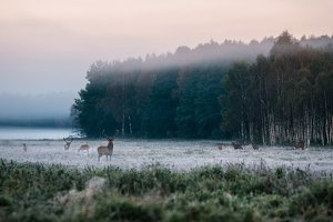 Red deer at the wildlife