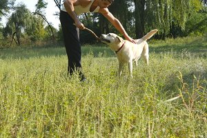 Young man and dog playing outdoor at nature. Labrador or golden retriever and his male owner spend time together at the green meadow. Guy stroking domestic animal. Close up
