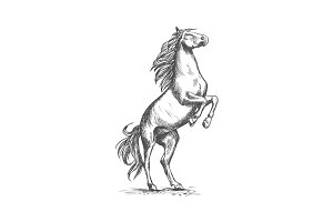 Rearing horse vector sketch equine horserace sport