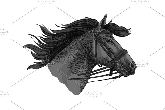 Horse Trotter In Bridle Racing Vector Sketch