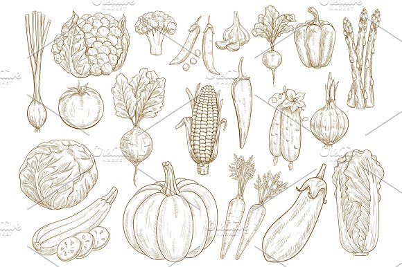 Vegetables Vector Sketch Isolated Icons Set