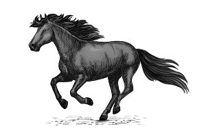 Black wild horse running on races vector sketch