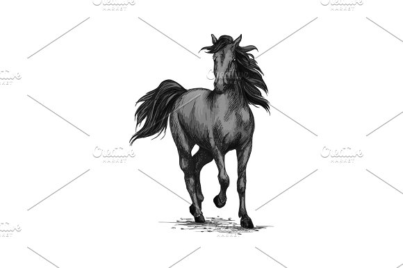 Racing Horse Running On Races Vector Sketch