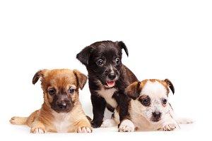 Three cute puppy