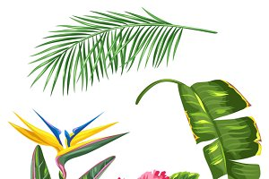 Tropical leaves and flowers set.
