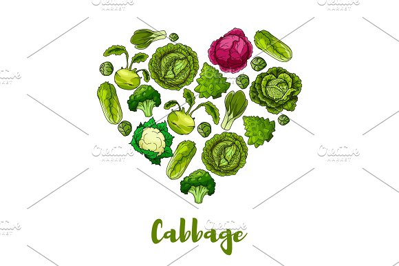Cabbage Vegetable Heart Shape Vector Poster