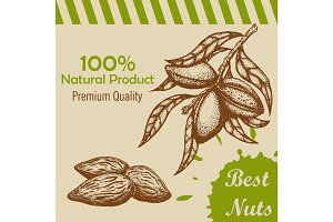 Vector template with handdrawn branch of of almonds and almond kernels.