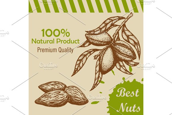 Vector Template With Handdrawn Branch Of Of Almonds And Almond Kernels