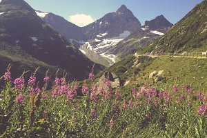 Mountain Range and Flowers